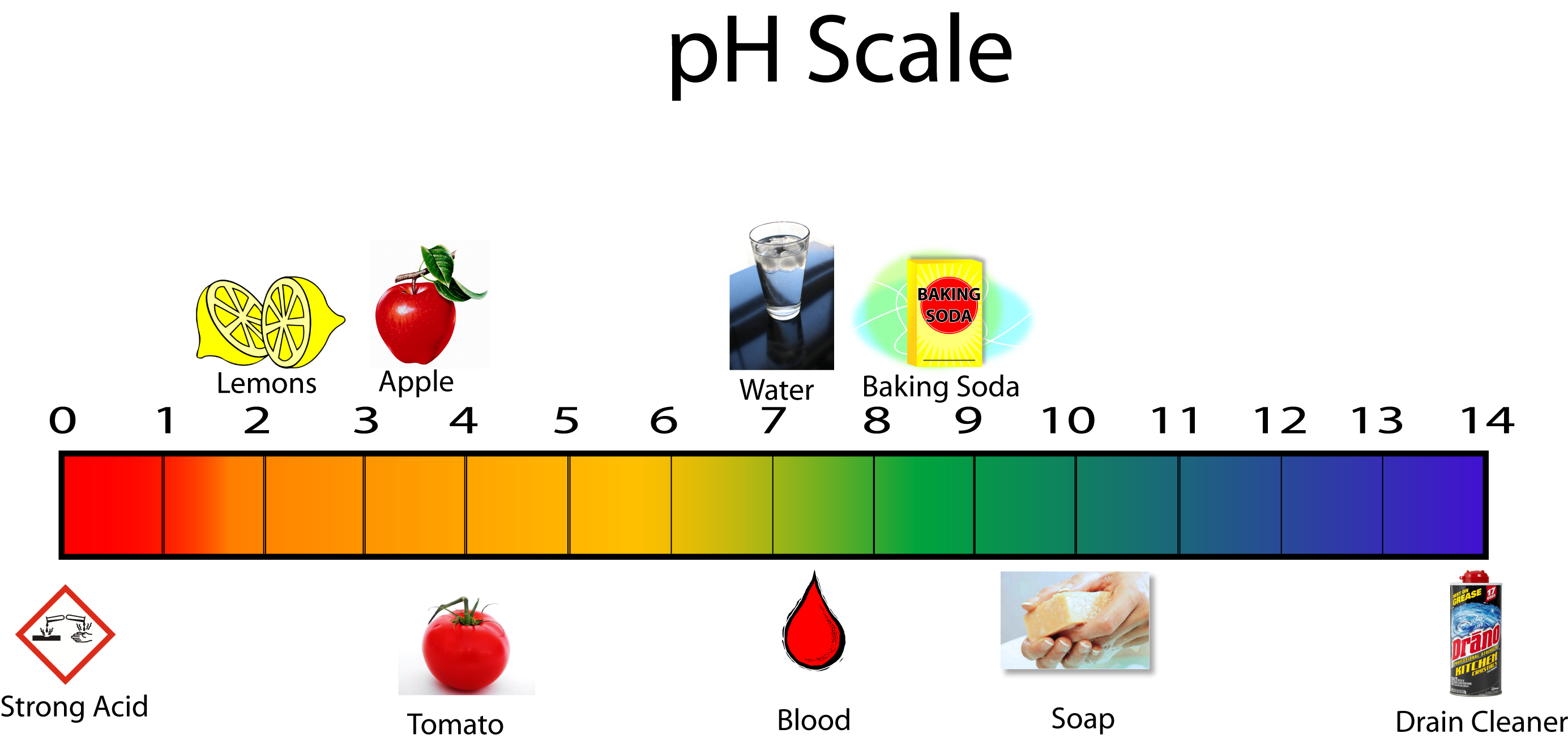 Acids and Bases - MCHS Science for Ph Scale Acids And Bases  575cpg
